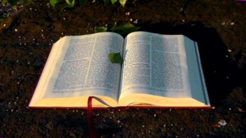 bible-138977_500