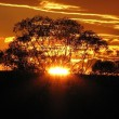 golden-sunset-173594_500