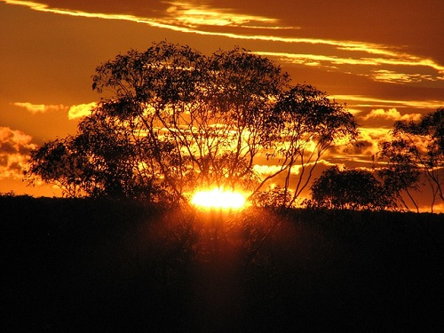 golden-sunset-173594_500