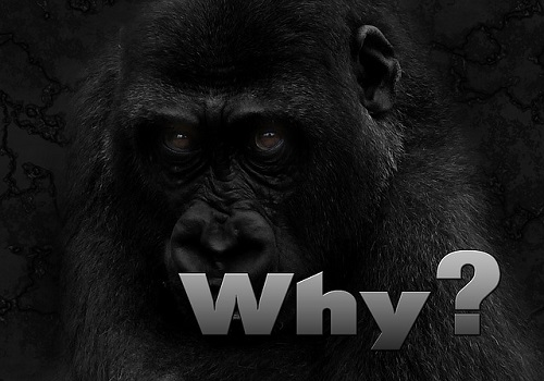 why-234596_500