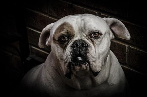 dog-75027_500