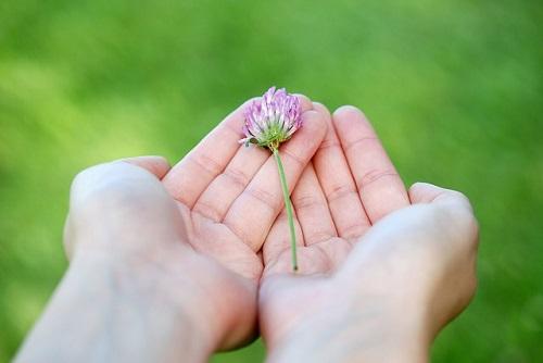 flower-8539_500